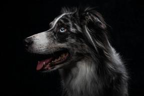 Pet Portraits 9 | Wheatman Photography |