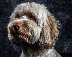Pet Portraits 12 | Wheatman Photography |