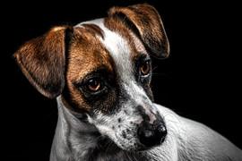 Pet Portraits | Wheatman Photography |