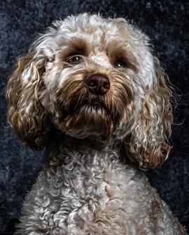 Pet Portraits 2 | Wheatman Photography |