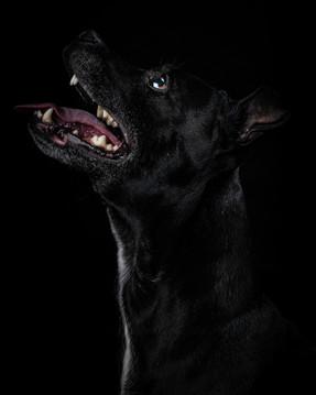 Pet Portraits 3 | Wheatman Photography |
