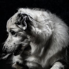 Pet Portraits 8 | Wheatman Photography |