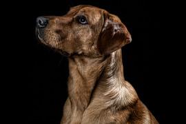 Pet Portraits 13 | Wheatman Photography |