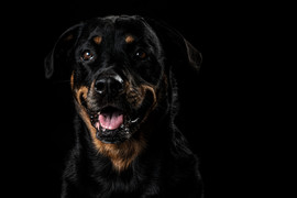Pet Portraits 4 | Wheatman Photography |