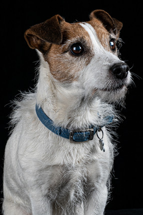 Pet Portraits 7 | Wheatman Photography |