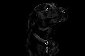 Pet Portraits 15 | Wheatman Photography |