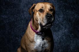 Pet Portraits 1 | Wheatman Photography |
