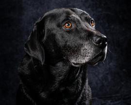 Pet Portraits 10 | Wheatman Photography |