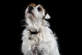Pet Portraits 16 | Wheatman Photography |