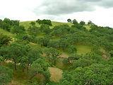 Native Trees of Mount Diablo