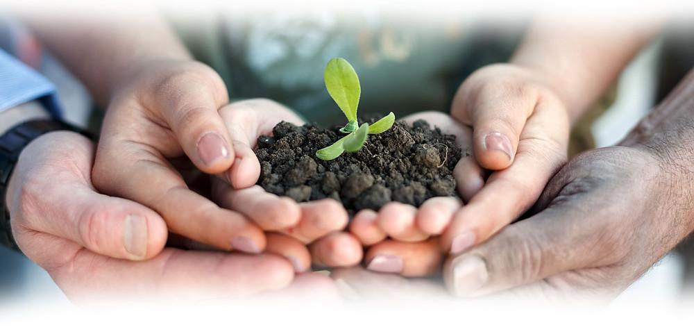 manos_sembrar_planta_internacional_crecimiento_equipo_amor1.jpg