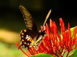 butterfly-5335716_960_720
