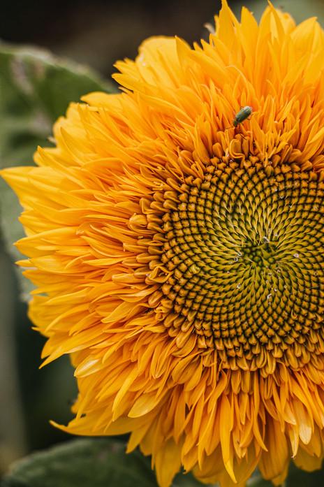 BeesNFlowers-60.jpg