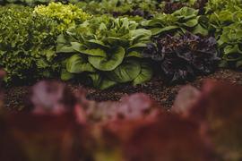 PlantSalePart2-69.jpg