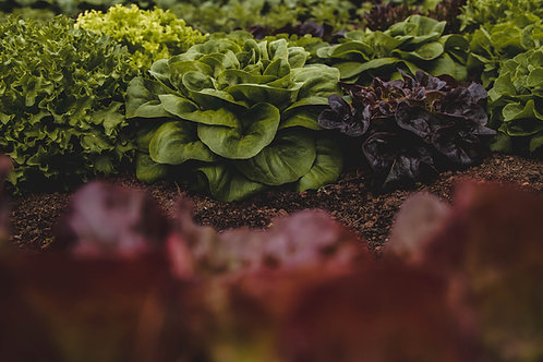 Lettuce, Salanova 1lb