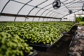 Greenhouse Grown