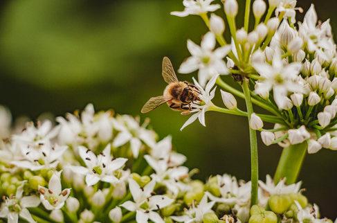 BeesNFlowers-27.jpg