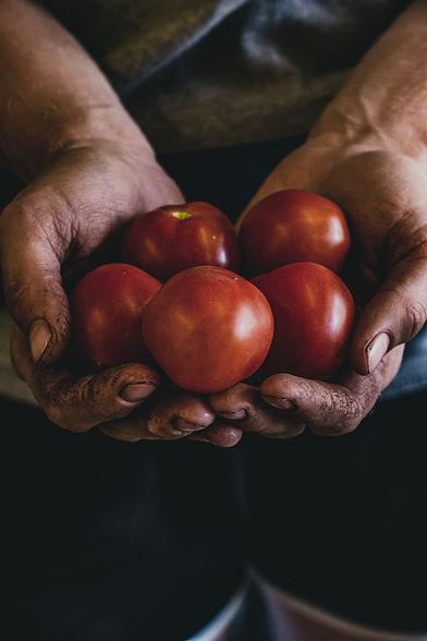 Local Farmers growing USDA Certified Organic Produce at Heritage Prairie Farm in Elburn, Illinois