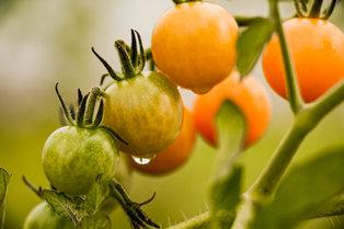Weekly Harvest