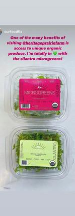 cilantro and radish microgreens