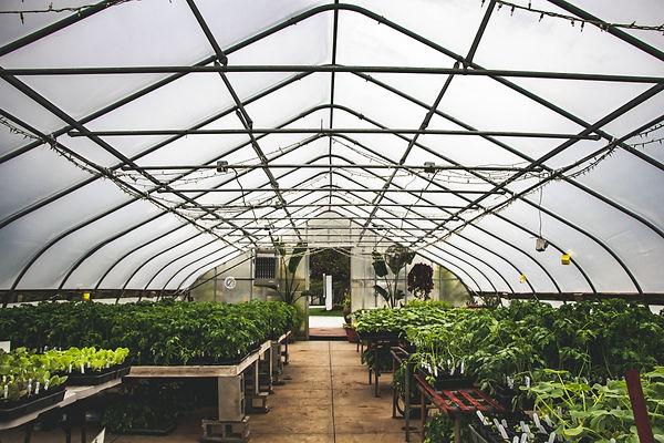 organic transplant sale at heritage prairie farm