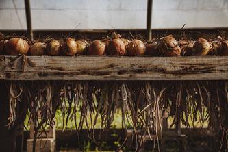 OnionsNoodleBeans-13.jpg