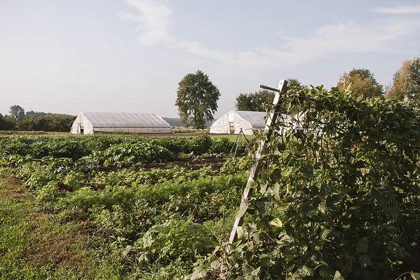 USDA Certified Organic Farm near Elburn, Illinois