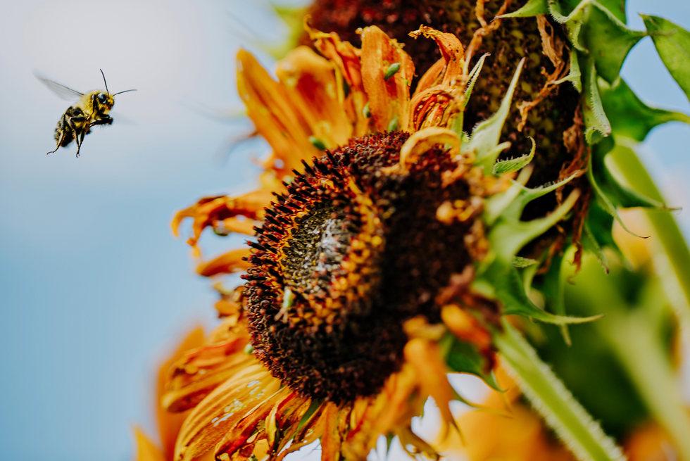 5 Grounds Willow Lane AllisonBobby.jpg