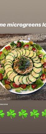 beautiful salad with microgreens
