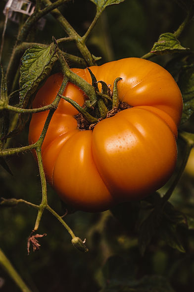 wholesale organic vegetables for restaurants and grocery stores