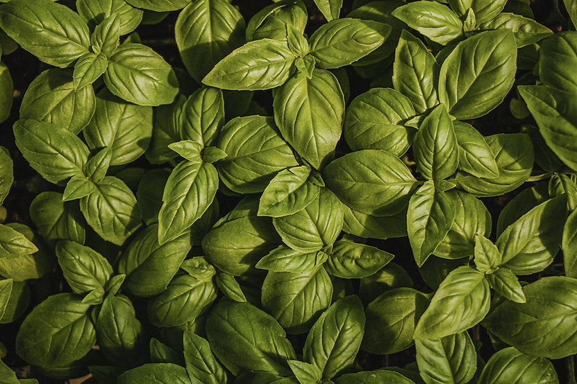 organic produce and herbs for restaurants and groceries