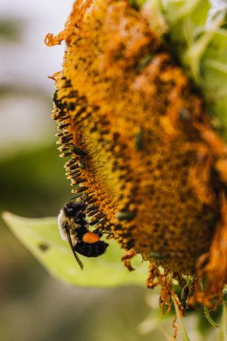 BeesNFlowers-70.jpg