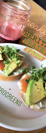 microgreens for breakfast