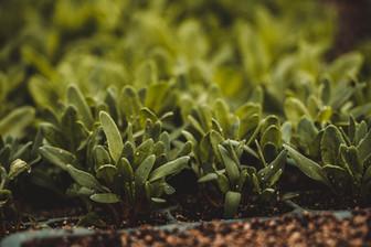 FarmingAndPlantSale-31.jpg