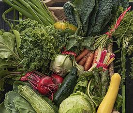 Basket of Locally Grown Organic Produce
