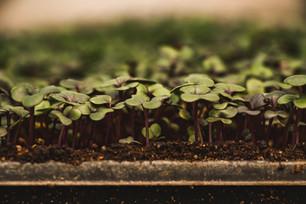 PlantSaleCarl-10.jpg