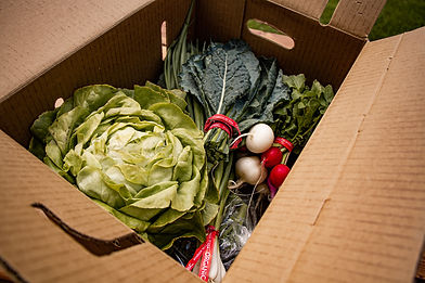 mealkit delivery box for local organic produce