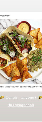 tacos with microgreens