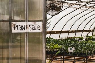 PlantSalePart2-1.jpg