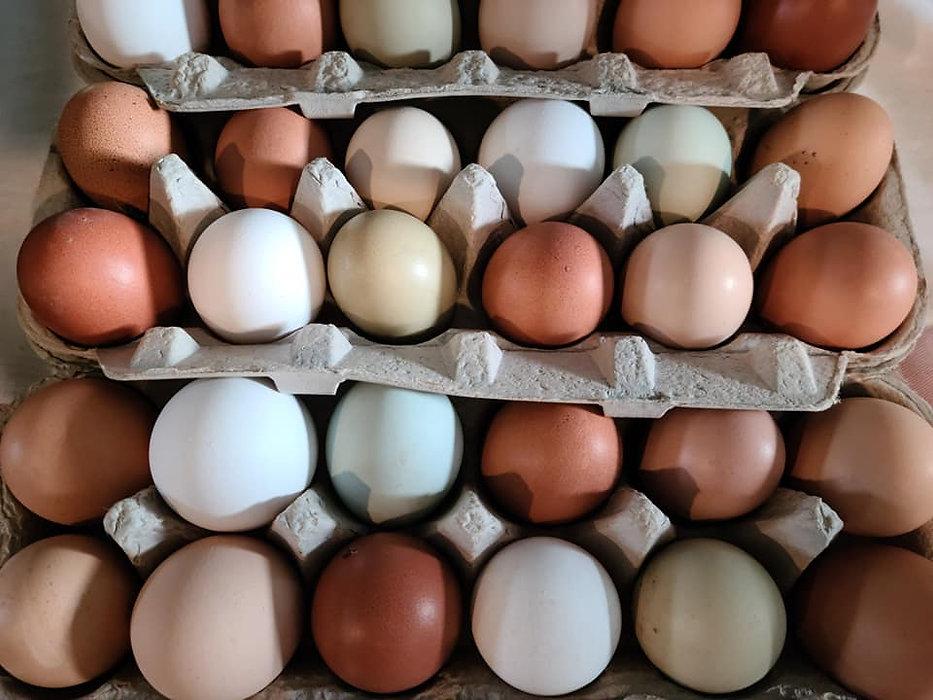 eggs2021.jpg