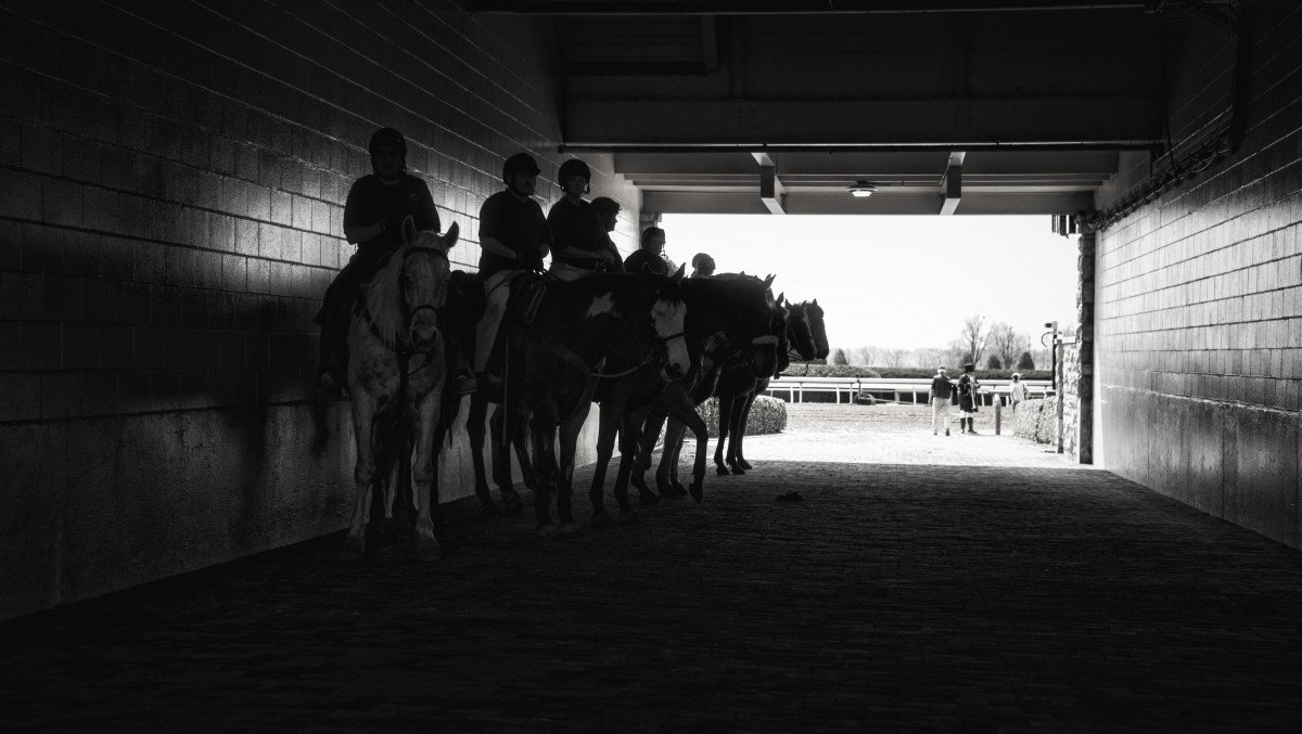 horse_race_race_track_d.jpg