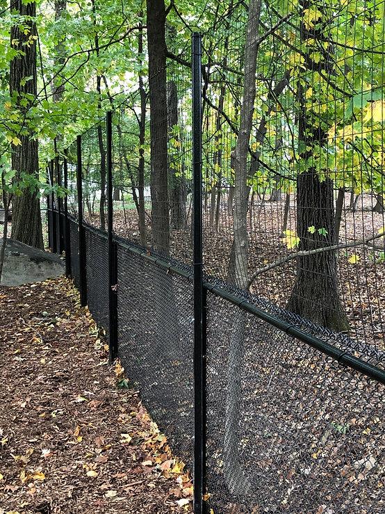 deer fence3.jpg