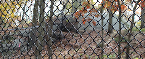 Ideas for chain link fence Westchester County NY