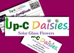 Up-C Daisies