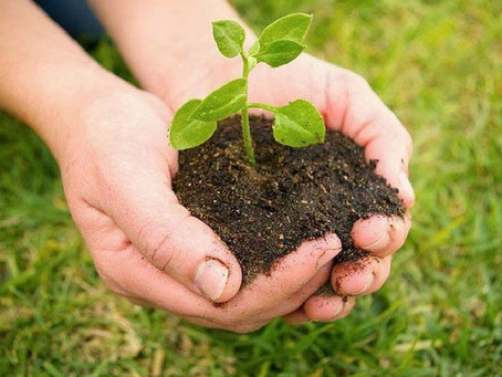 Buenas practicas agricolas: Manual para productores