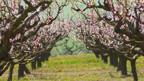 La Floración en los cultivos: mas que una cuestión nutricional.
