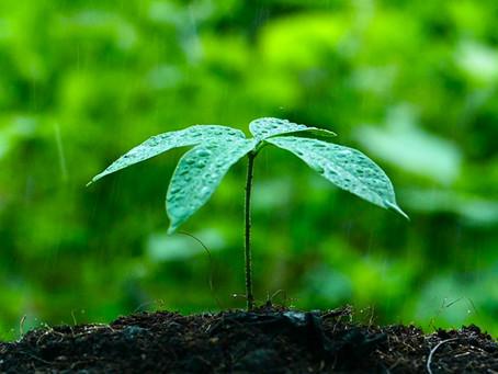 Fisiología del estrés hídrico por exceso de agua en las plantas