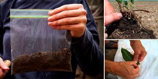 Guía para realizar correctos análisis foliares y de suelo