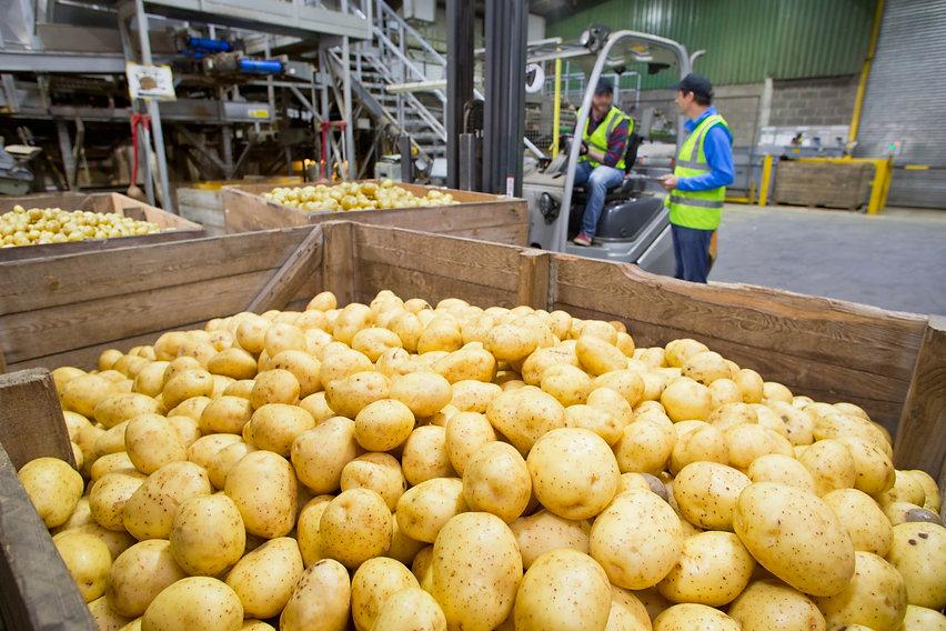 KisanHub supply chain solutions_potato store V2.jpg