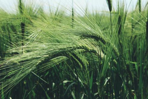 green-grass-field-946186.jpg